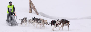 Fot:mushing.pl