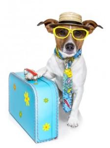 pies z bagażem
