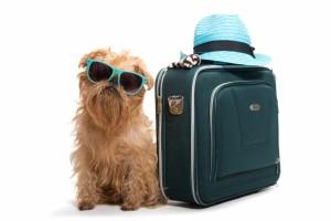 pies z walizką