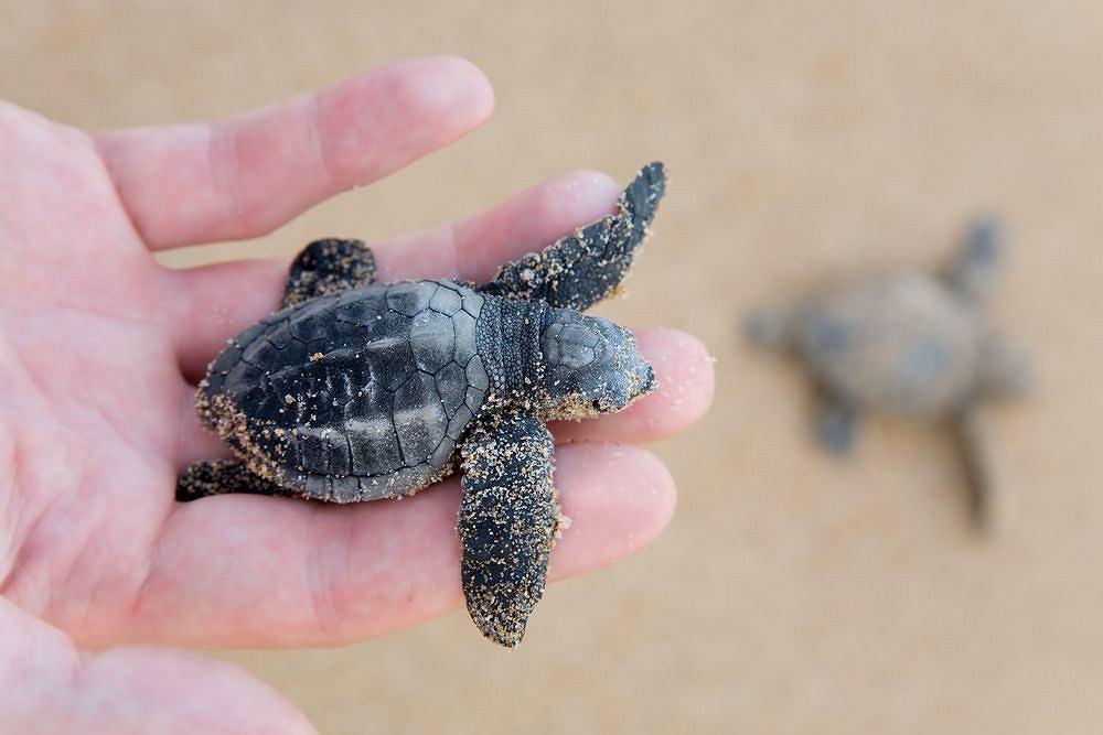 żółw na dłoni